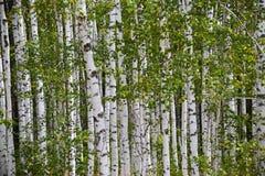 Δασικά δέντρα ομορφιάς φύσης σιωπής Στοκ φωτογραφία με δικαίωμα ελεύθερης χρήσης