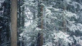 Δασικά δέντρα στη χιονοθύελλα απόθεμα βίντεο