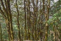 Δασικά δέντρα στο άδυτο άγριας φύσης Binsar Στοκ Εικόνα