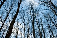 Δασικά δέντρα χωρίς φύλλα Στοκ Φωτογραφίες
