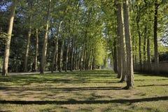 Δασικά ίχνη στις Βερσαλλίες Γαλλία Στοκ Εικόνες
