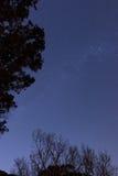 Δασικά αστέρια Στοκ Φωτογραφία