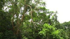 Δασικά δέντρα και ποταμός φιλμ μικρού μήκους