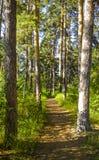 Δασικά δέντρα νεράιδων και μουδιασμένος Μαγικό αλσύλλιο Στοκ Φωτογραφία