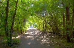 Δασικά δέντρα νεράιδων και μουδιασμένος Μαγικό αλσύλλιο Στοκ Εικόνες