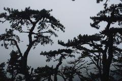 Δασικά δέντρα ομίχλης τροπικών δασών Στοκ Φωτογραφίες