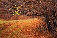 Δασικά δέντρα φθινοπώρου Συννεφιάζω πορτοκαλί και κόκκινο δάσος φθινοπώρου Στοκ εικόνες με δικαίωμα ελεύθερης χρήσης