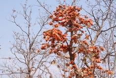 δασικά δέντρα φλογών στοκ εικόνα