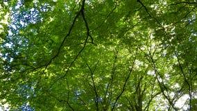 Δασικά δέντρα ως υπόβαθρο φύσης στοκ φωτογραφία με δικαίωμα ελεύθερης χρήσης
