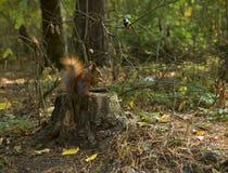 Δασικά ζώα: Σκίουρος και πουλί στοκ φωτογραφίες