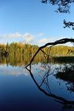 Δασικά και παλαιά δέντρα κάτω από το μπλε ουρανό στην ακτή της λίμνης Στοκ Φωτογραφία