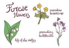 Δασικά λουλούδια καθορισμένα Στοκ Φωτογραφία
