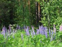 Δασικά λουλούδια - 2 Στοκ Εικόνες