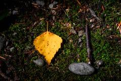 Δασικά σύμβολα: φύλλο, πέτρα και ραβδί που βάζουν σε μια χλόη Στοκ Εικόνες