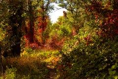 Δασικά τοπία φθινοπώρου με τις ακτίνες του θερμού φωτός που φωτίζουν το χρυσές κόκκινες πράσινες φύλλωμα και την πορεία στοκ εικόνα