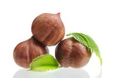 Δασικά φουντούκια καρυδιών που απομονώνονται Στοκ Εικόνες