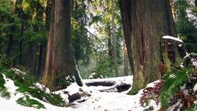 Δασικά φτέρες και δέντρα στο παχύ χιόνι απόθεμα βίντεο
