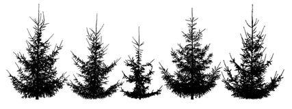 Δασικά χριστουγεννιάτικα δέντρα, σύνολο ελεύθερη απεικόνιση δικαιώματος