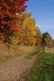 Δασικά χρώματα το φθινόπωρο στο hdr Στοκ Φωτογραφίες
