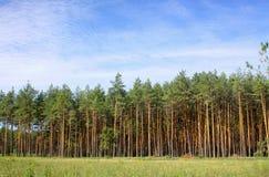 δασικές άγρια περιοχές δέ&nu Στοκ Φωτογραφίες