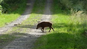 δασικές άγρια περιοχές κά&pi στοκ εικόνα με δικαίωμα ελεύθερης χρήσης