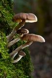 δασικές άγρια περιοχές μανιταριών Στοκ φωτογραφία με δικαίωμα ελεύθερης χρήσης