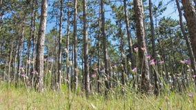 Δασικές άκρες φιλμ μικρού μήκους