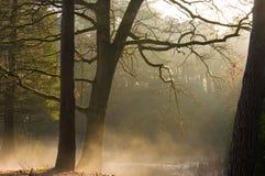 Δασικές ακτίνες ήλιων και χαμηλή ομίχλη Στοκ εικόνες με δικαίωμα ελεύθερης χρήσης