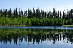 δασικές αντανακλάσεις Στοκ Εικόνες