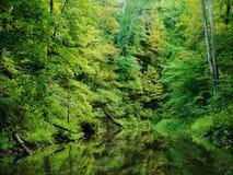 Δασικές αντανακλάσεις ρευμάτων Στοκ εικόνα με δικαίωμα ελεύθερης χρήσης