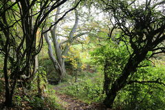 Δασικές, δασόβιες εικόνες Στοκ εικόνα με δικαίωμα ελεύθερης χρήσης