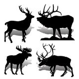 Δασικές ελάφια και άλκες θηλαστικών ζώων συλλογής, στη λευκιά ΤΣΕ Στοκ φωτογραφία με δικαίωμα ελεύθερης χρήσης