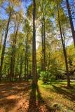 δασικές ηλιαχτίδες Στοκ φωτογραφία με δικαίωμα ελεύθερης χρήσης