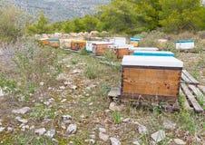 δασικές κυψέλες μελισσών Στοκ Φωτογραφία