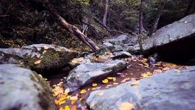 Δασικές πέτρες που καλύπτονται στα φθινοπωρινά φύλλα φιλμ μικρού μήκους