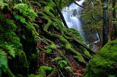 Δασικές πτώσεις Στοκ Εικόνες