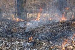 Δασικές πυρκαγιές στοκ εικόνα με δικαίωμα ελεύθερης χρήσης