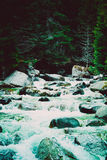 Δασικές ροές ποταμών δέντρων πεύκων μέσω των βράχων Όμορφο powerf Στοκ φωτογραφίες με δικαίωμα ελεύθερης χρήσης
