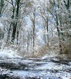 δασικές υπέρυθρες ακτίν&eps Στοκ εικόνες με δικαίωμα ελεύθερης χρήσης
