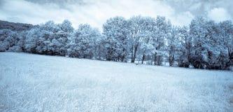 δασικές υπέρυθρες ακτίν&eps Στοκ Φωτογραφία