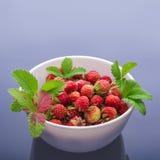 Δασικές φράουλες Στοκ Φωτογραφία