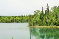 Δασική άκρη της λίμνης στο βόρειο Οντάριο, Καναδάς Στοκ Φωτογραφία