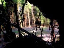 Δασική άποψη από το κρησφύγετο κορμών δέντρων Στοκ φωτογραφία με δικαίωμα ελεύθερης χρήσης