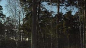 Δασική άποψη από το παράθυρο του αυτοκινήτου απόθεμα βίντεο