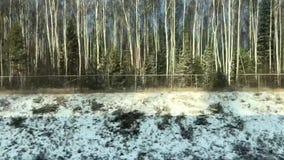 Δασική άποψη από το παράθυρο τραίνων απόθεμα βίντεο