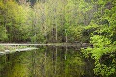 Δασική λίμνη που περιβάλλεται από τα πράσινα δέντρα την άνοιξη το βράδυ Στοκ εικόνα με δικαίωμα ελεύθερης χρήσης