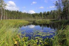 Δασική λίμνη στο βόρειο τμήμα της Ρωσίας Στοκ Εικόνες