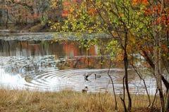 Δασική λίμνη το φθινόπωρο Στοκ φωτογραφία με δικαίωμα ελεύθερης χρήσης