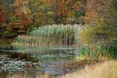 Δασική λίμνη το φθινόπωρο Στοκ Εικόνες