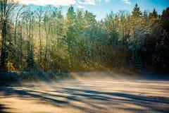 Δασική λίμνη το χειμώνα Στοκ εικόνες με δικαίωμα ελεύθερης χρήσης